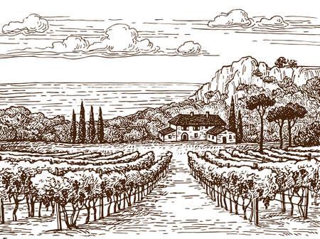 田舎の風景。手には、ブドウ園の景色が描かれました。ビンテージ スタイルのベクトル図です。
