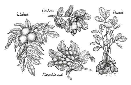 Walnoot, cashew, pistachio en pindakaas