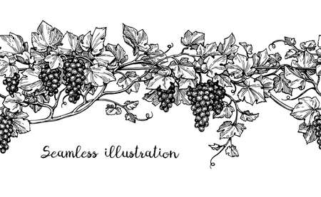 Seamless illustration of grapes. Hand drawn vector sketch.