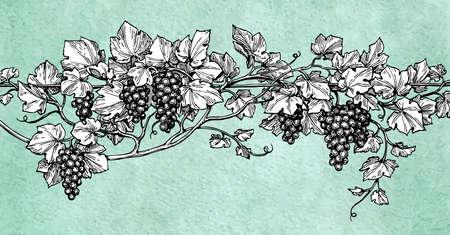 手には、ぶどうのベクトル イラストが描かれました。古い紙の背景につるのスケッチ。レトロなスタイル。