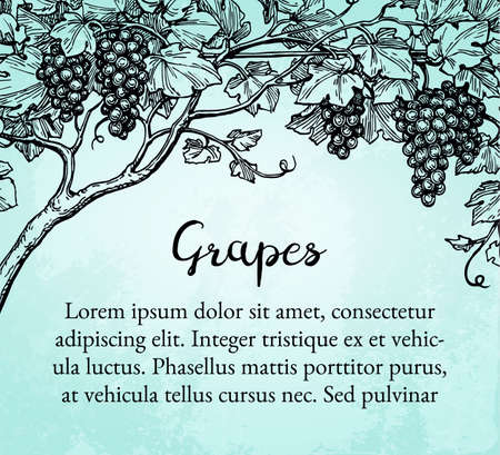 Banner template. Hand drawn vector illustration of grapes. Vine sketch on old paper background.