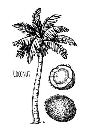 Coconut and palm tree Ilustração