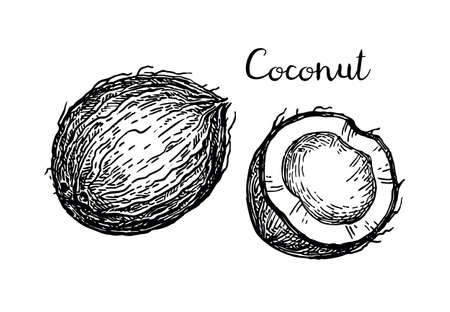 Vector illustration of coconut.