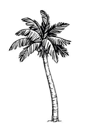 Coconut palm tree Иллюстрация