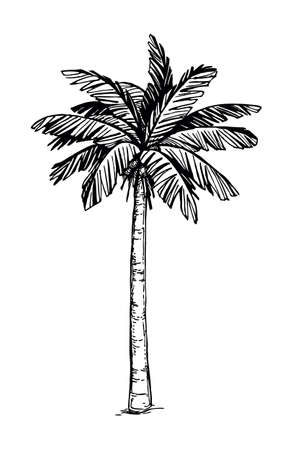 Coconut palm tree Иллюстрация