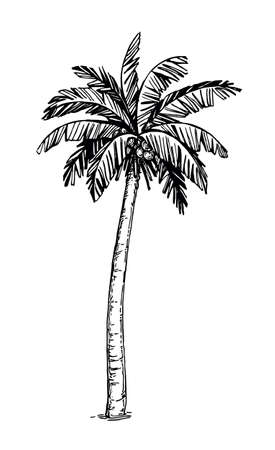 Coconut palm tree Stock Illustratie