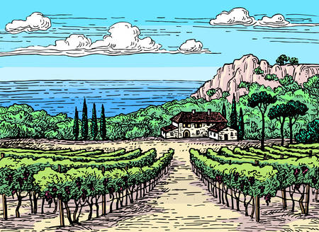 winemaking: Hand drawn vineyard landscape.