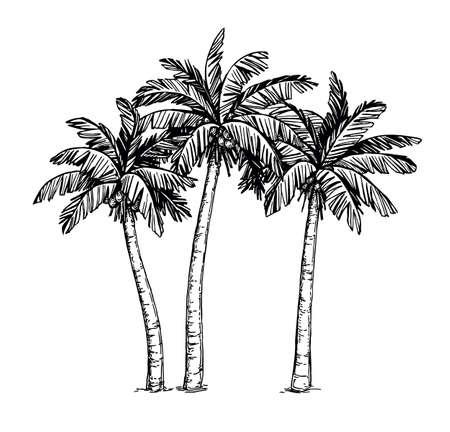 야자 나무의 잉크 스케치