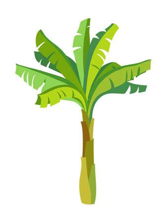 바나나 야자 나무 일러스트