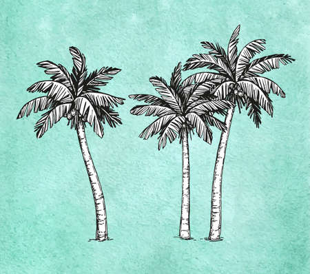 Hand drawn illustration of coconut palm trees.