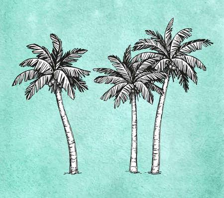 coastal: Hand drawn illustration of coconut palm trees.