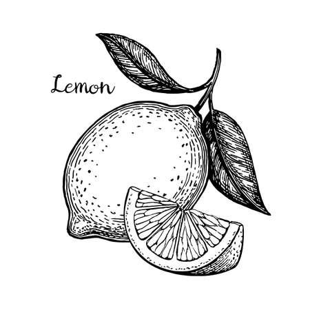 手には、レモンのベクトル イラストが描かれました。白い背景上に分離。レトロなスタイル。