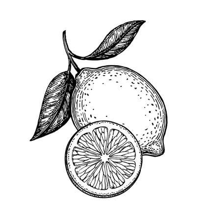 Vector illustration of lemon Vettoriali