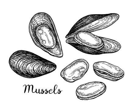 Mussels ink sketch. 矢量图片