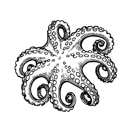 Octopus ink sketch. Stock fotó - 82095704