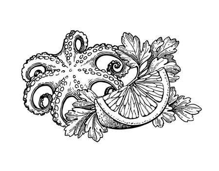 Octopus Tintenskizze Standard-Bild - 82095715