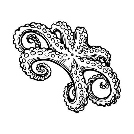 タコ インク スケッチ。 写真素材 - 82095709