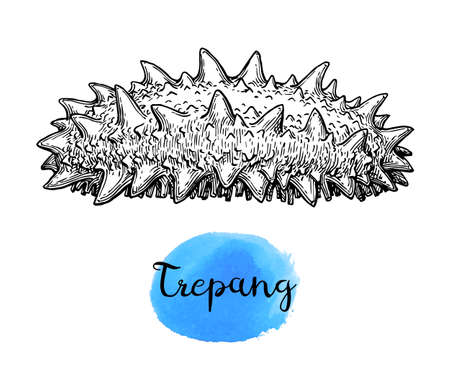 Trepang 잉크 스케치.