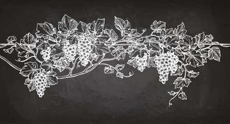黒板背景につるのスケッチ。手には、ぶどうのベクトル イラストが描かれました。  イラスト・ベクター素材