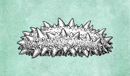 Zeekomkommer inktschets op oud papier achtergrond. Hand getrokken vectorillustratie. Retro stijl.