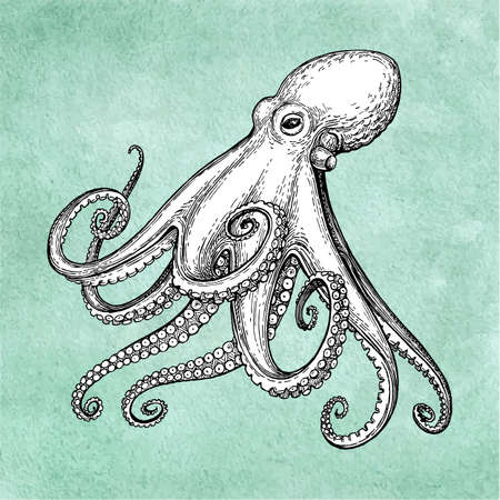 Octopus ink sketch on old paper background. Hand drawn vector illustration. Retro style. 일러스트