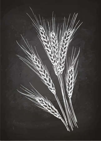 Ears of wheat. Chalk sketch on blackboard. Hand drawn vector illustration. Retro style.