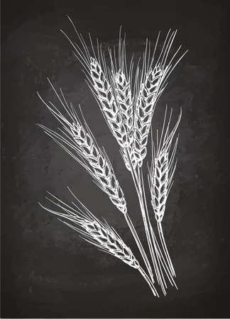 Oreilles de blé. Croquis de craie sur tableau noir. Illustration vectorielle dessinés à la main. Style rétro. Vecteurs