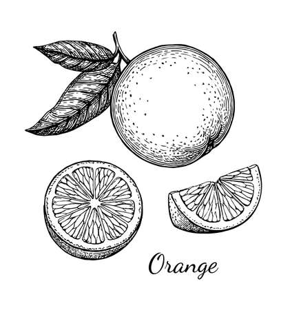 Orange set. Isolated on white background. Hand drawn vector illustration. Retro style ink sketch .