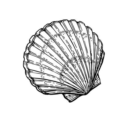 Scallops ink sketch. Isolated on white background. Hand drawn vector illustration. Retro style.