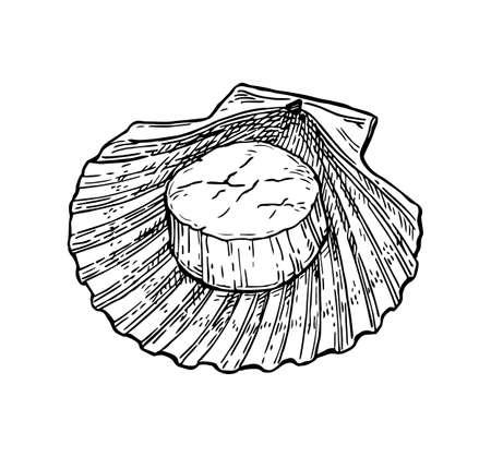 가리비 잉크 스케치입니다. 흰색 배경에 고립. 손으로 그린 된 벡터 일러스트 레이 션. 복고 스타일입니다. 일러스트