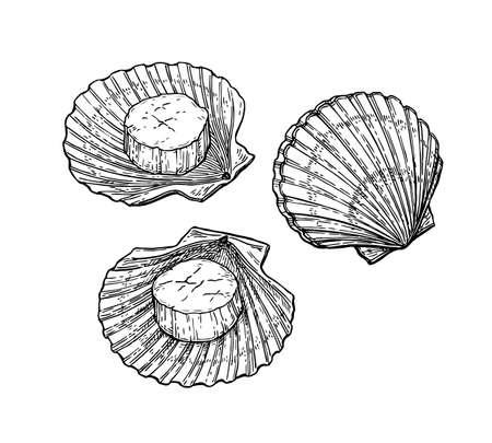 Jakobsmuscheln gesetzt. Meeresfrüchte-Tusche-Skizze. Lokalisiert auf weißer Hintergrundhand gezeichneter Vektor-Illustration Retrostil.