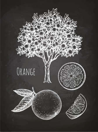 Chalk sketch of orange Illustration