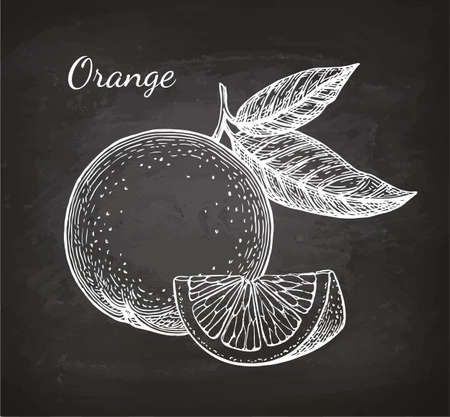 Chalk sketch of orange Ilustracja