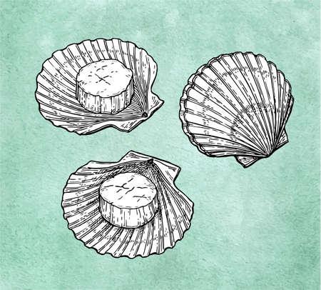 Scallops ink sketch Vektoros illusztráció