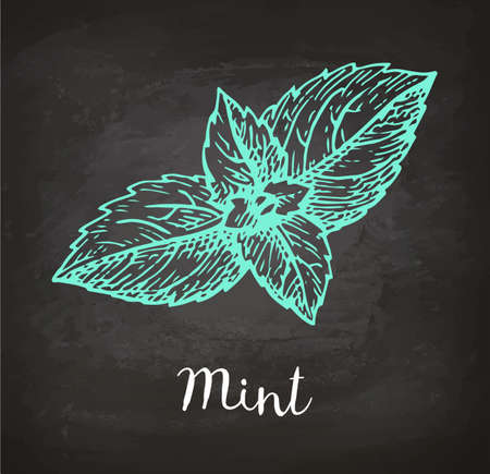 Chalk sketch of mint on blackboard background. Hand drawn vector illustration. Retro style.