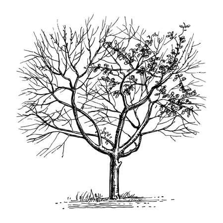 インク乾燥木のスケッチ。