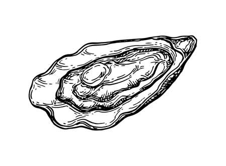 Schizzo d'inchiostro Oyster. Archivio Fotografico - 84356825