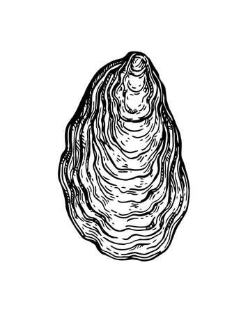 Esquisse d'encre de coquille d'huître. Banque d'images - 84356826