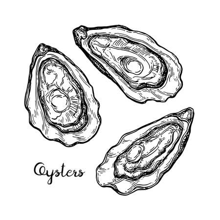 Oysters ink sketch.