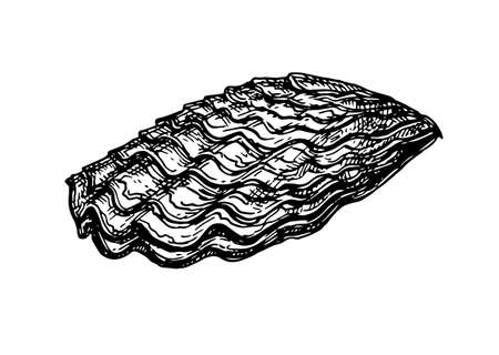 Esquisse d'encre de coquille d'huître. Banque d'images - 84356830