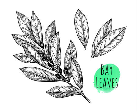 Bay leaves set.