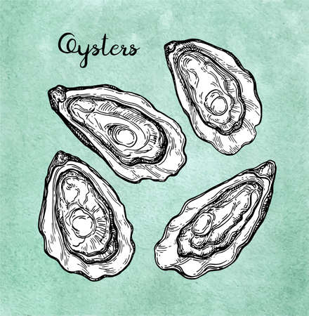 Oysters set illustration.