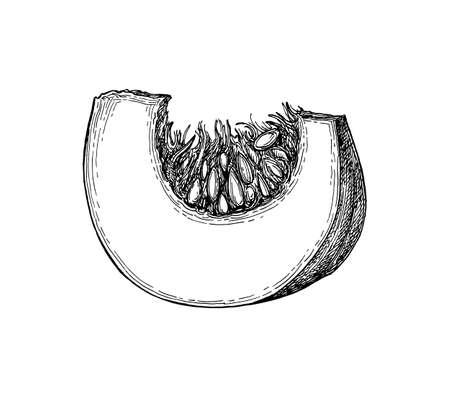 Tintenskizze des Kürbisstücks lokalisiert auf weißem Muster Standard-Bild - 85982130