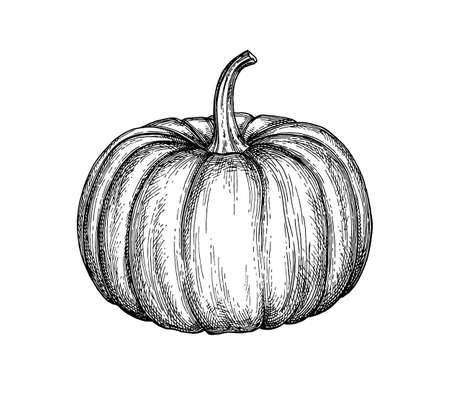 Ink sketch of pumpkin isolated on white background. Hand drawn vector illustration. Retro style.  イラスト・ベクター素材