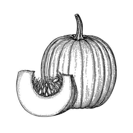 Inktschets van pompoen op witte achtergrond wordt geïsoleerd die. Hand getekende vectorillustratie. Retro stijl. Stock Illustratie