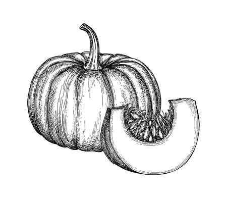 Abbozzo dell'inchiostro della zucca isolato su priorità bassa bianca. Illustrazione vettoriale disegnato a mano Stile retrò. Vettoriali