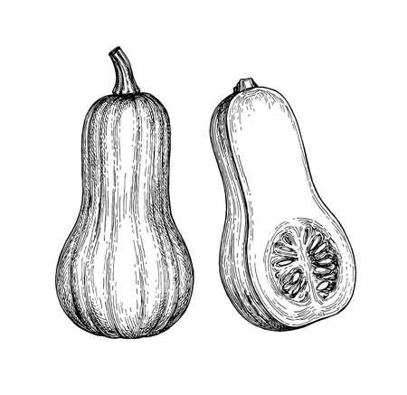 Inktschets van butternut squash geïsoleerd op een witte achtergrond. Hand getrokken vectorillustratie. Retro stijl.