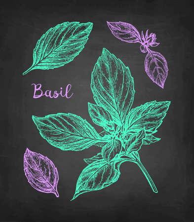 Basil set. Chalk sketch on blackboard background. Hand drawn vector illustration. Retro style.