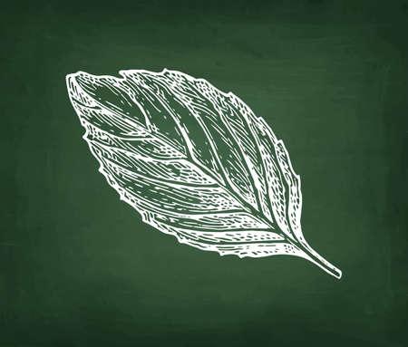 Chalk sketch of basil on blackboard background. Hand drawn vector illustration. Retro style. 일러스트