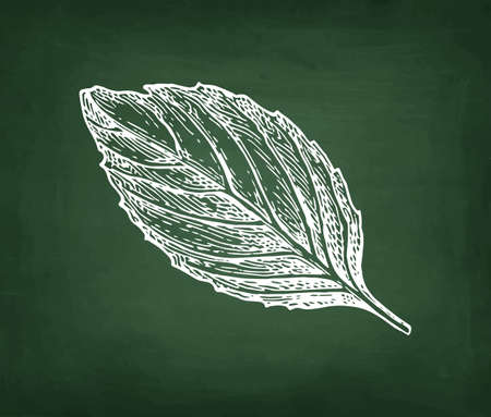 Chalk sketch of basil on blackboard background. Hand drawn vector illustration. Retro style. Stock Illustratie
